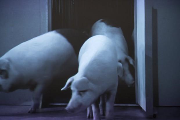 Cena de vídeo do espanhol Santiago Sierra na mostra 'Beleza?'